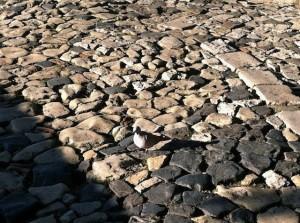 castello-cobblestone