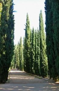 treelined-path