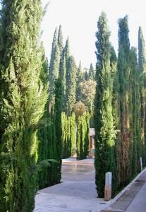 alhambra-trees