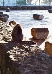 sao-cats