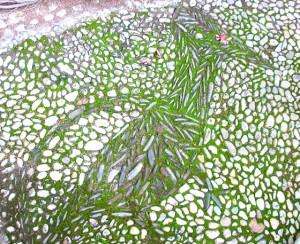 walkway-mosaics