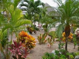 cozumelport-garden