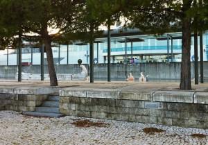 boardwalk-waterinstallation