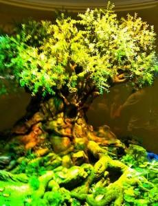 lifetree-model