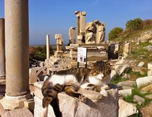 cat-ephesusrelief