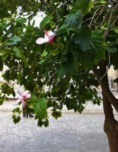 valletta-flower
