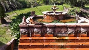 asia-tigerenclosure