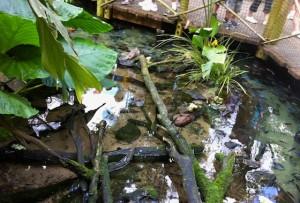 panganiforest-aquarium