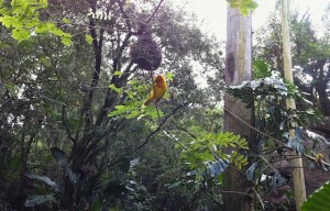 panganiforest-bird