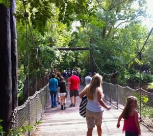 panganiforest-ropebridge
