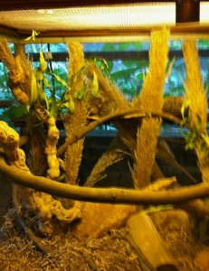 panganiterrarium-closeup