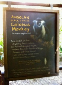 colobusmonkey-infosign