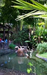 discoveryisland-flamingohabitat
