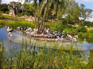 kilimanjaro-flamingopool