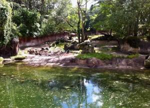 kilimanjaro-habitat