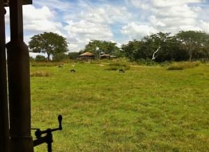 kilimanjaro-savannah