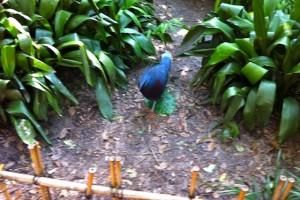 maharajah-birdhabitat2