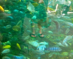pangani-aquarium