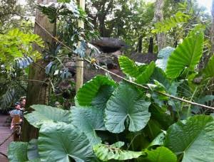 pangani-aquariumbird