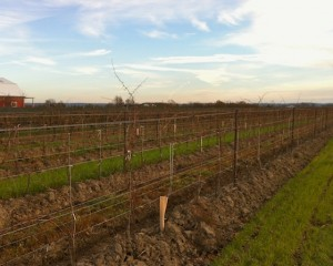 pondview-vines2