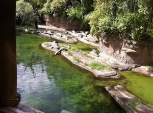 kilimanjaro-crocodiles