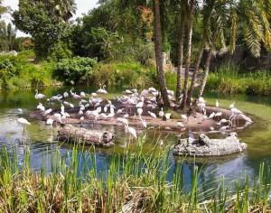 kilimanjaro-flamingos