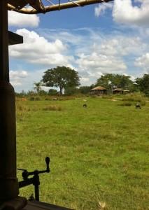 kilimanjaro-plains2