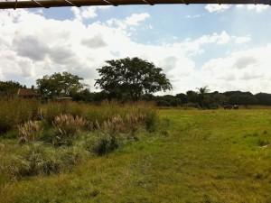 kilimanjaro-plains3