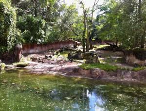 kilimanjaro-rhino
