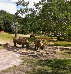 kilimanjaro-rhinos