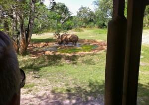 kilimanjaro-rhinos2