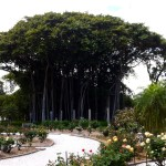 Ringling Museum: Bayfront Gardens [Repost]